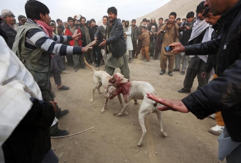 Borbe pasa sajt Ubijeni psi